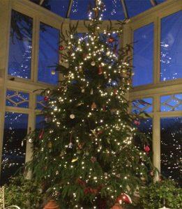 decorated_tree_box_400x460