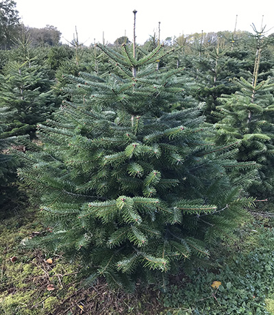 tree-homepage