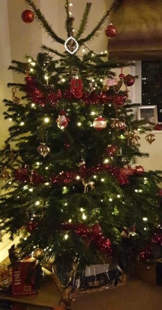 CHRISTMAS TREES 4